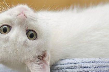 Natürliche Unterstützung der Darmflora von Hunden und Katze