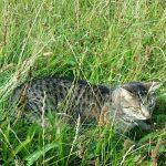 Am Frühlingstage – Katzengedicht