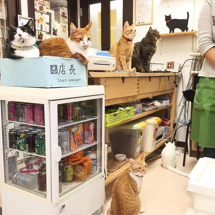 Cafe fuer Katzen