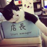 Entdecken Sie das Katzencafé, das von Katzen betrieben wird