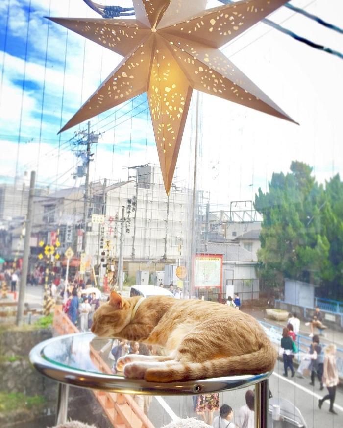 Katzencafe Japan