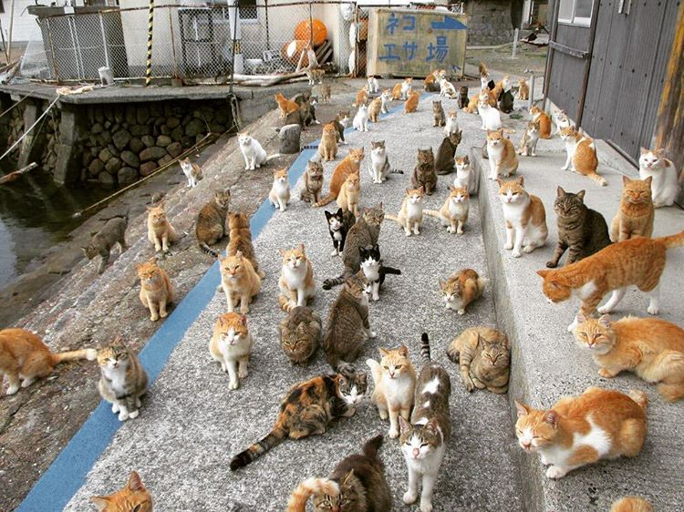cats in japan island
