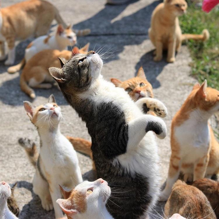 japanese cat island japan