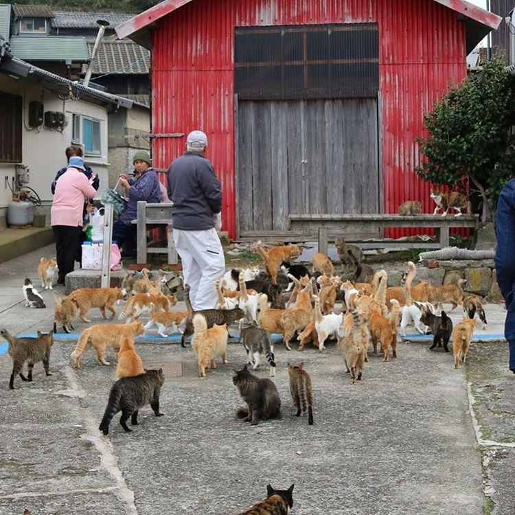 Die japanische Katzeninsel