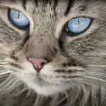 Internationale Katzenausstellungen – in ganz Deutschland gibt es Termine