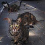 Der Kampf um Israels Katzen