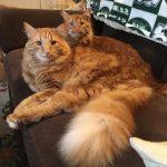 Katze erzieht eigenen Doppelgänger