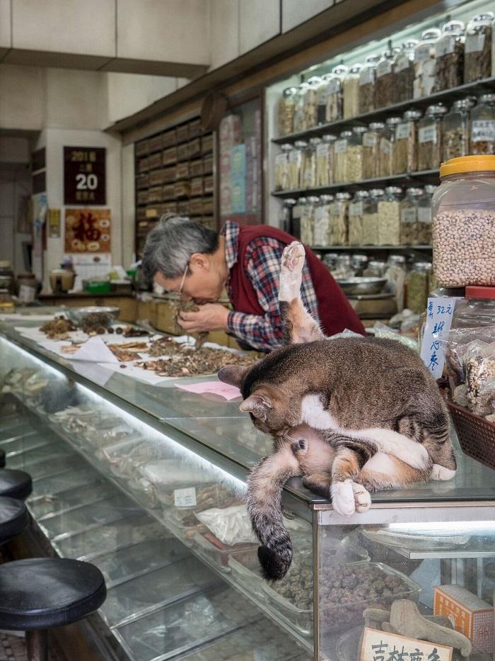 HK Shop Cats