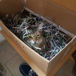 Cat in the Box – deswegen steigen Katzen so gerne in Kartons