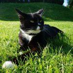 Ist Katzengras eigentlich gut für das Tier?
