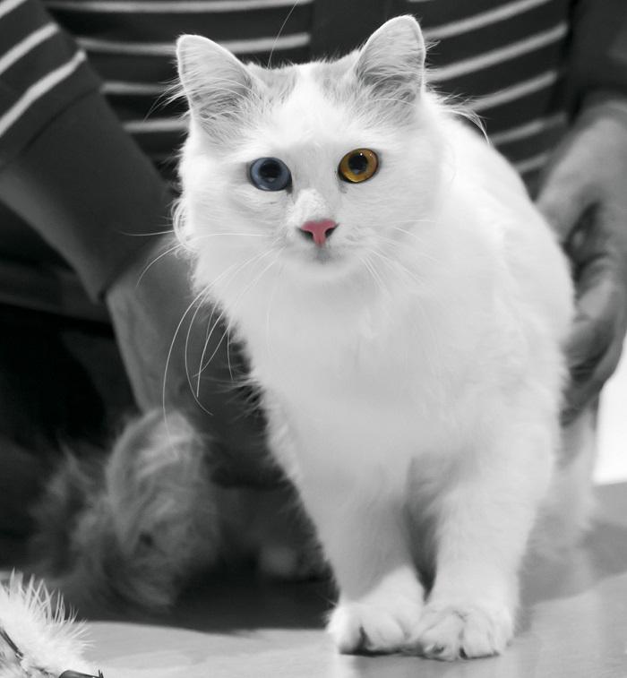 Diese Titel gibt's bei internationalen Katzenausstellungen