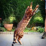 Die schönste Katze der Welt