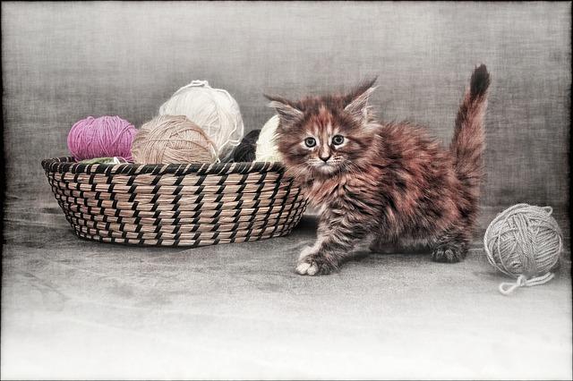 Katzen spielen mit Wolle