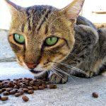So erkennt jeder ein hochwertiges Katzenfutter