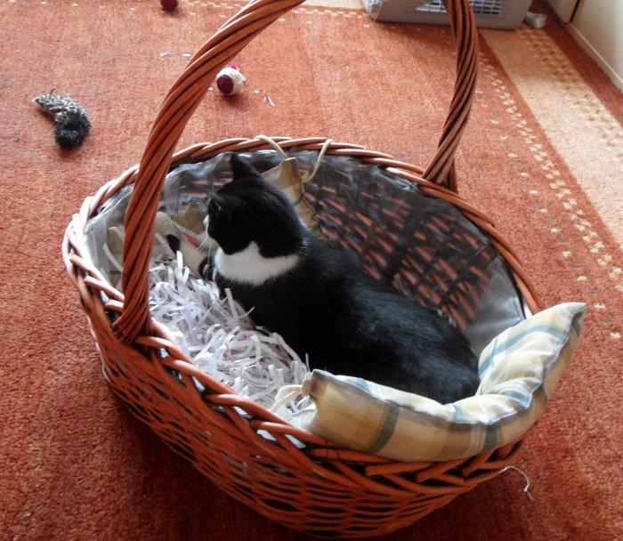 Katzengesetz Nr.1: Alles was ich finde, gehört mir!