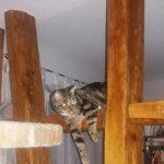 Sind Katzen im Haus deutlich besser aufgehoben?