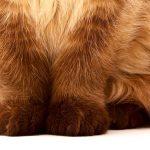 Katzenausstellungen – das ist nicht erlaubt