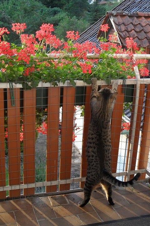 Den Balkon katzensicher machen