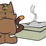 Das Katzenklo: So entstand es und das ist zu beachten