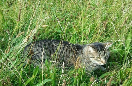 katze im Garten Katzengedicht