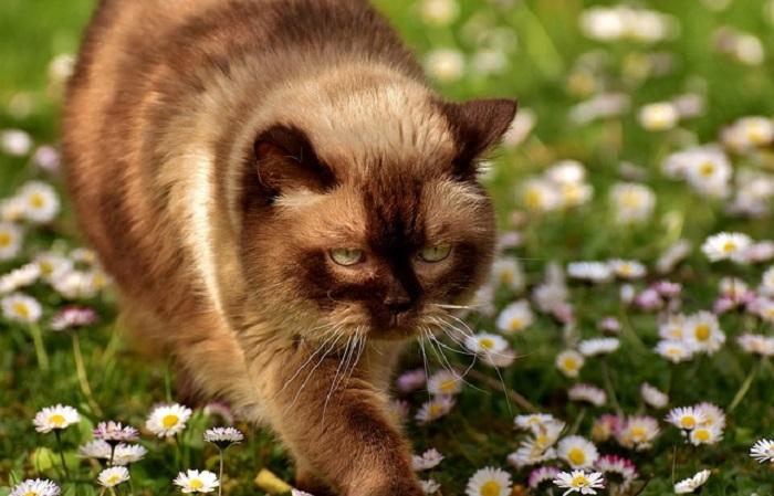 Katzenausstellungen in der Schweiz bis Ende des Jahres