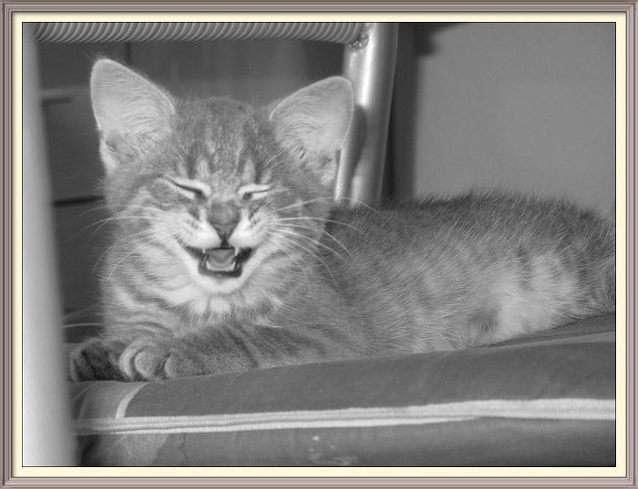 Clickertraining für Katzen – so funktioniert es
