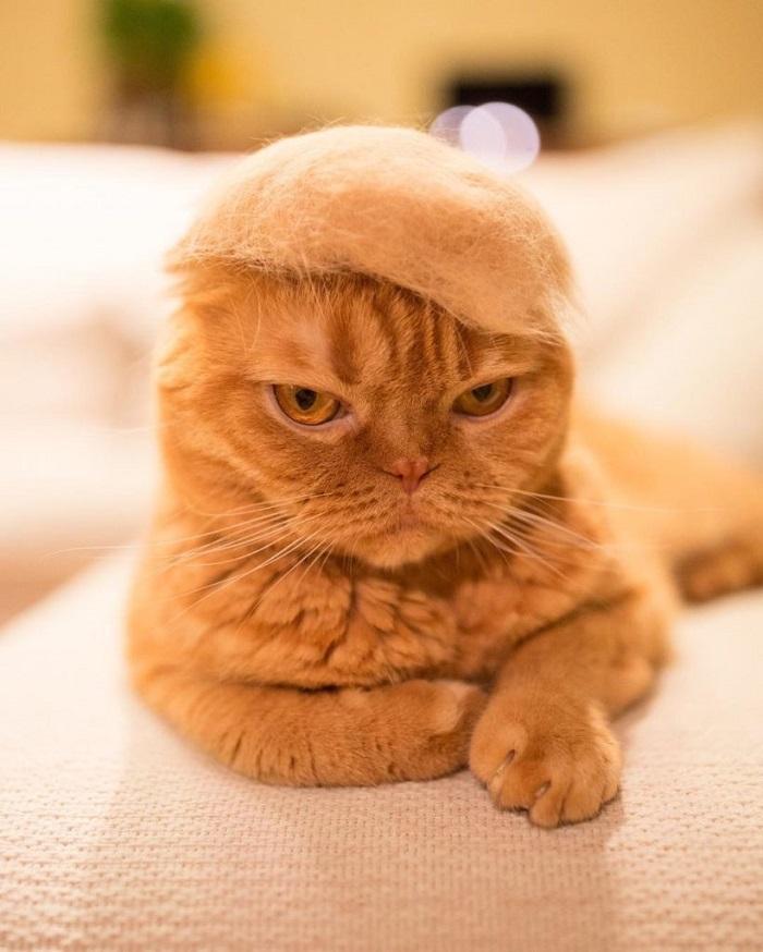 Katzenhüte aus eigenem Fell gemacht
