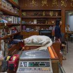 Hong Kongs arbeitende Katzen