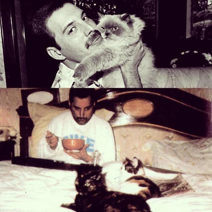 Freddie Mercury und seine Liebe zu Katzen