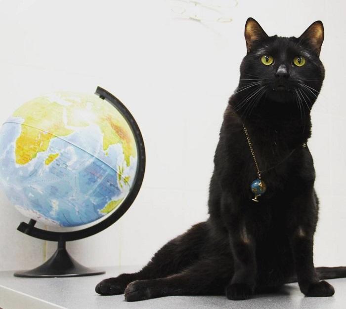 eine katze die nicht mehr laufen kann hilft anderen tieren katzen veranstaltungen. Black Bedroom Furniture Sets. Home Design Ideas