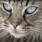 Ordnung muss sein – auf das muss bei einer Katzenausstellung geachtet werden