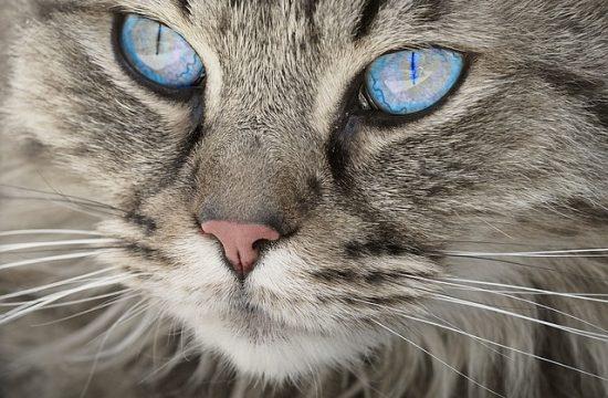 Katzenveranstaltungen