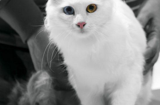 Katzenmessen