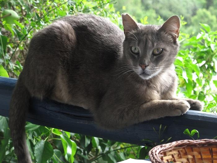Eine Katze aus dem Tierheim – eine gute Idee?