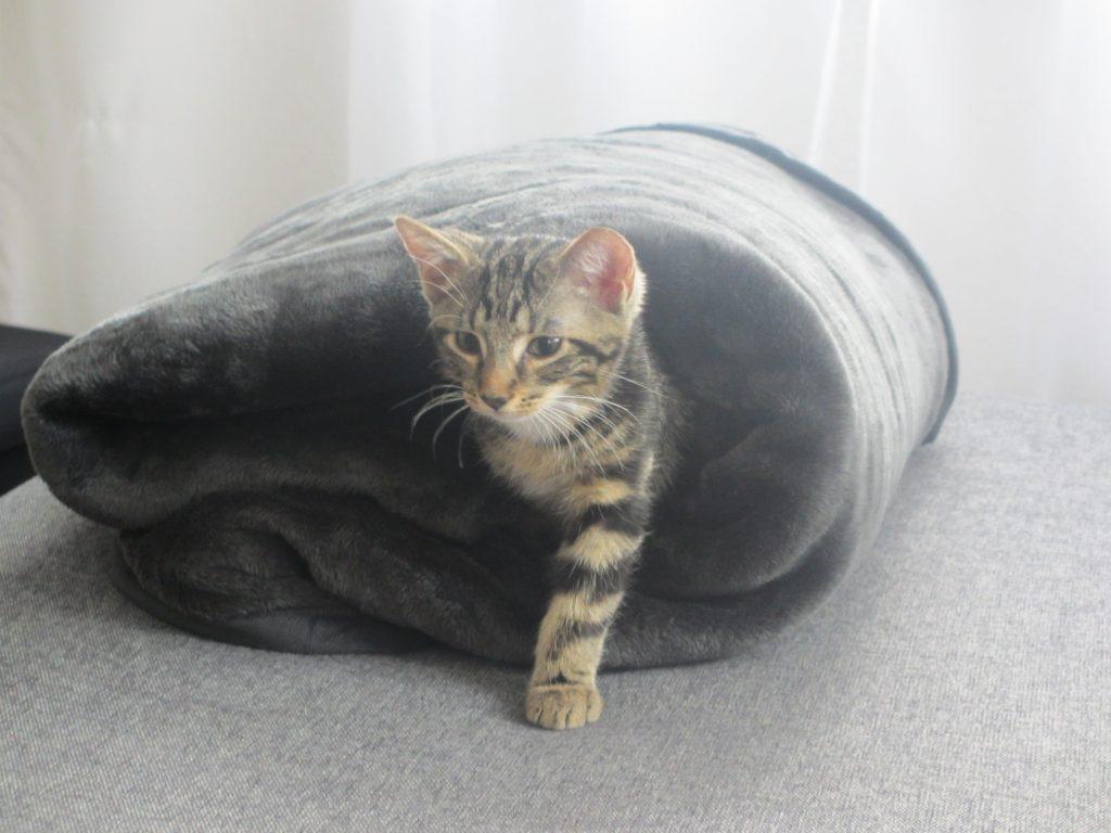 wie ist ein katzenverein aufgebaut katzen veranstaltungen. Black Bedroom Furniture Sets. Home Design Ideas