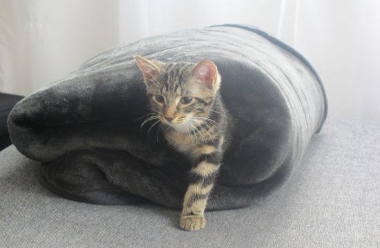 Katzenvereine