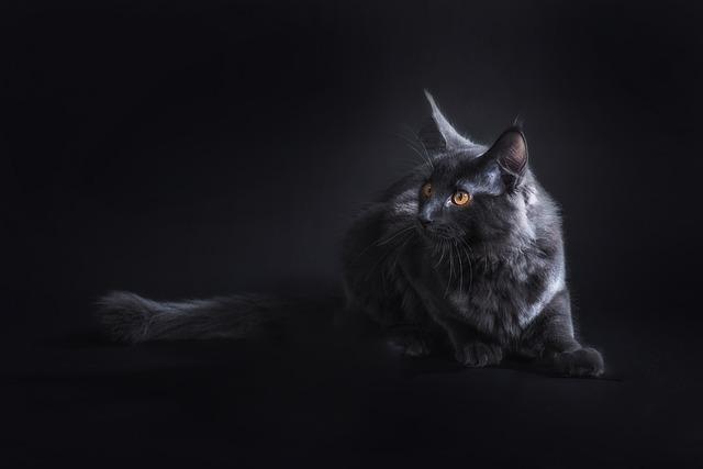 Katzen haben das Superauge!