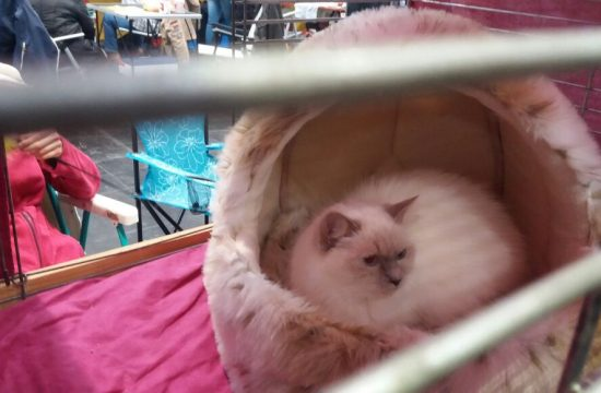 Katzenausstellung