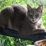Katzen sind wirklich faszinierende Wesen – Doch kannten Sie schon diese Fakten?