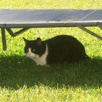 Der Sommer kann Katzen zusetzen