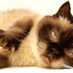 Welcher Maßstab gilt für das Züchten von Katzen?