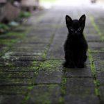 Bringen Schwarze Katzen wirklich Unglück?