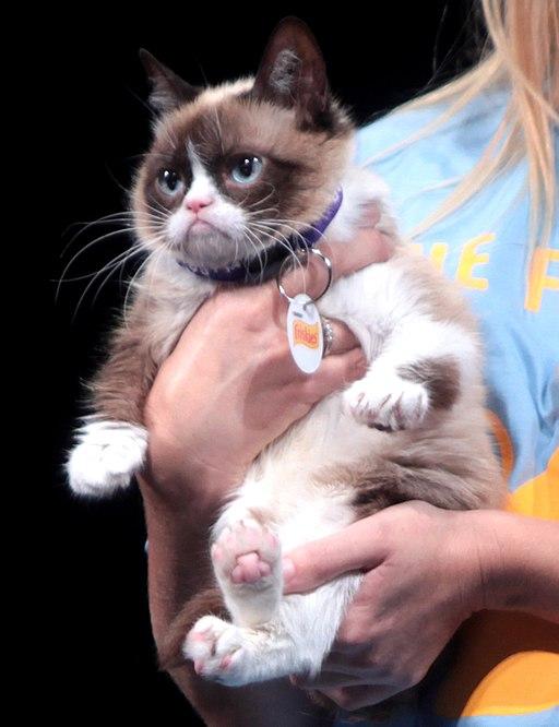 Wenn eine Katze ein Promi wird
