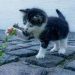Wenn die Katze einen Bogen um ihr Klo macht