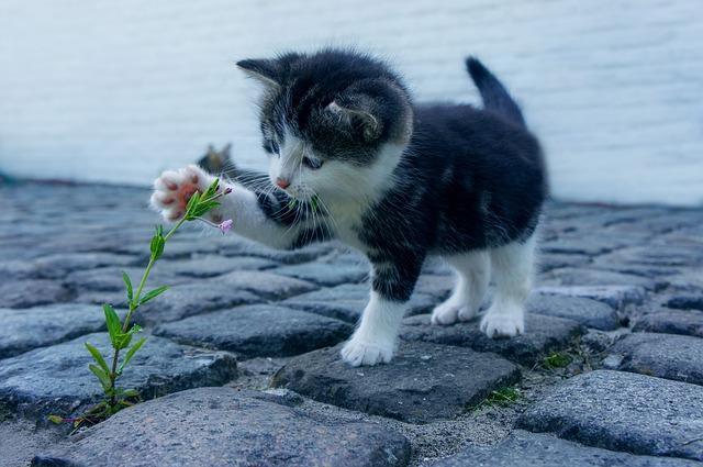 Mit alternativen Methoden die Katze heilen