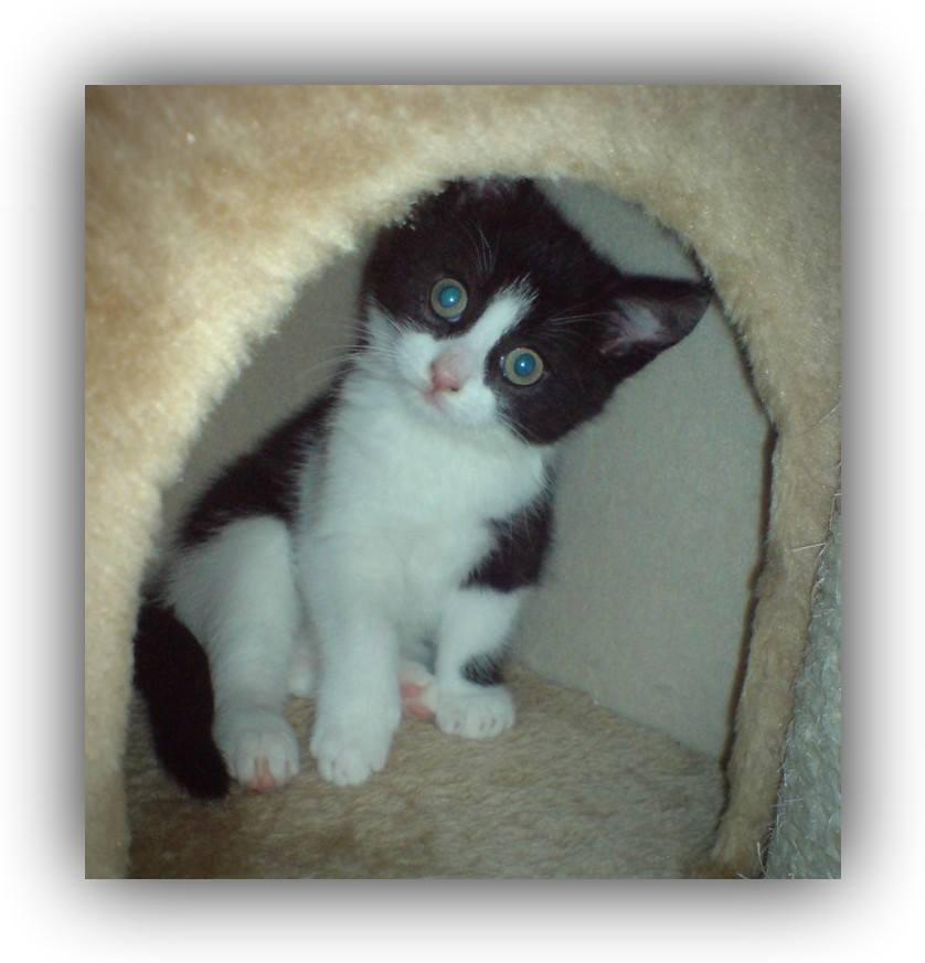 Vom Kitten zur Katze – so entwickeln sich Katzenbabys