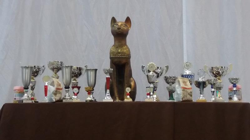 Gut belesen über Ausstellungen und Events für Katzen