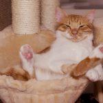 Der Kratzbaum ist die Leidenschaft der Katze
