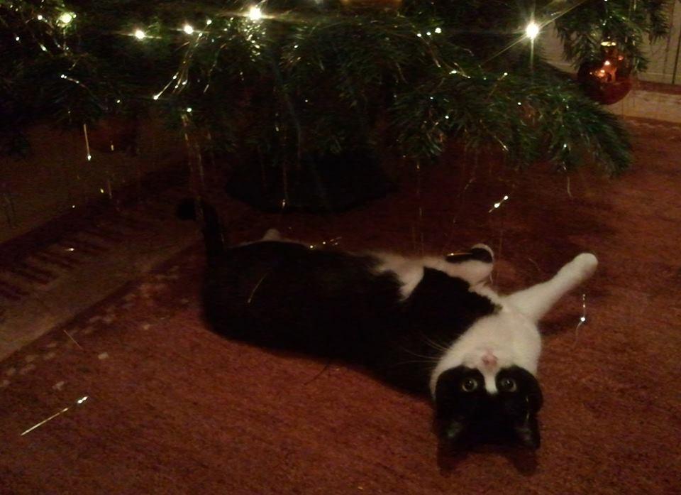 schwarzweiß katze Christbaum