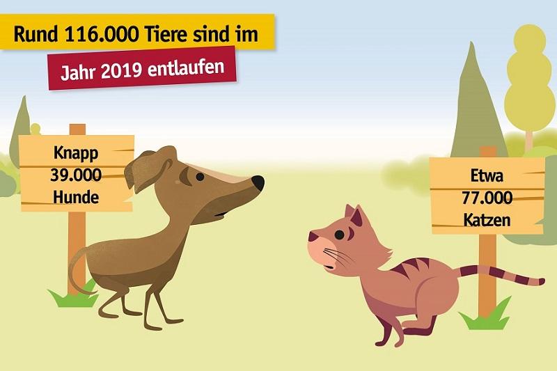 95.000 Wiedervereinigungen von Mensch und Tier zeigen: Kennzeichnung und Registrierung sind der beste Schutz